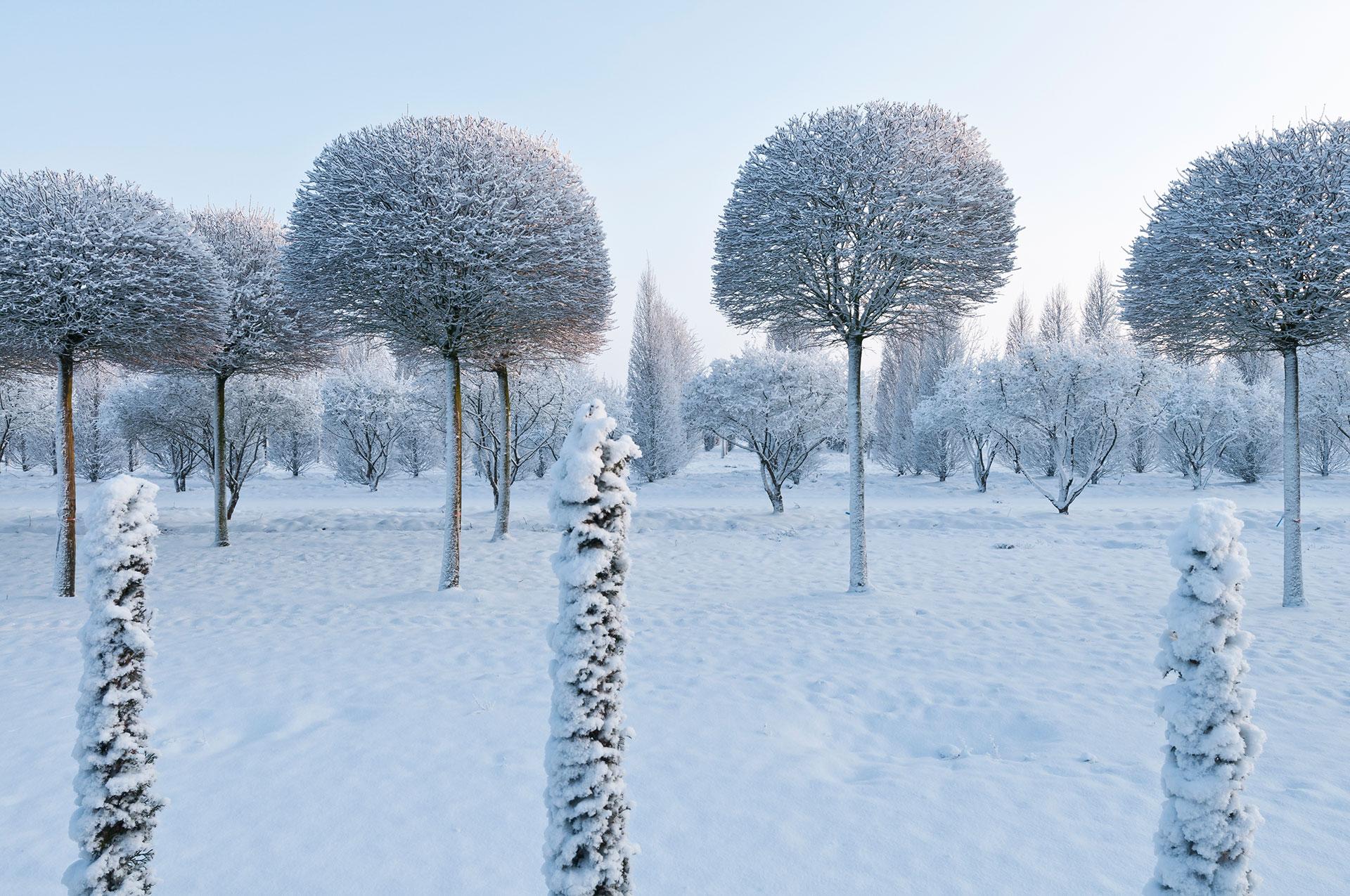 Niedersachsen im Ammerland eine Baumschule im Winter mit schneebedeckten Bäumen