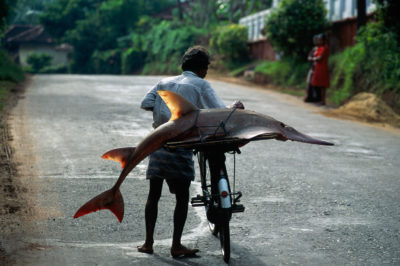Asien, Sri Lanka, Insel,  Fischer Fahrrad, Tier, Fisch, Geigenrochen oder Hairochen, Gepaeckträger, Landstrasse, Transport, Barfuss,