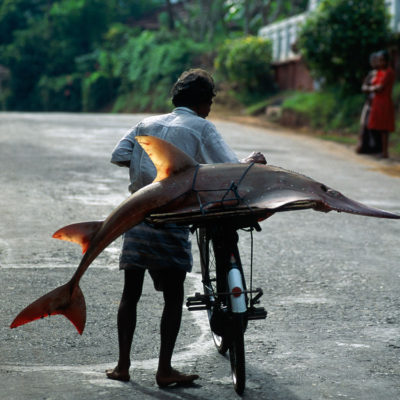 Man with a guitar-fish on a bicycle in Sri Lanka