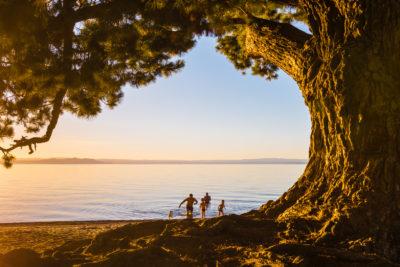 Neuseeland, New Zealand, Nordinsel Lake Taupo, bandende, knorriger Nadelbaum,